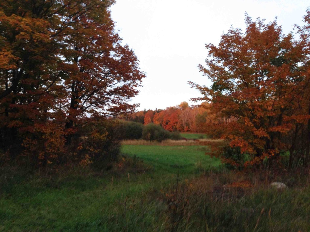 Fall colours in the Secret Field